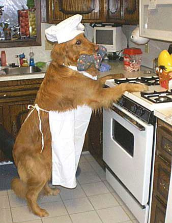 Photo of dog standing in front of stove